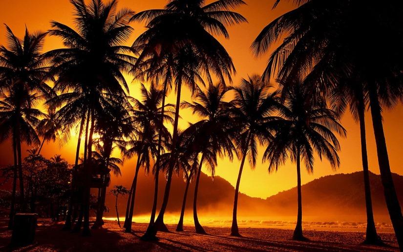 california-palm-trees-1080p-x73